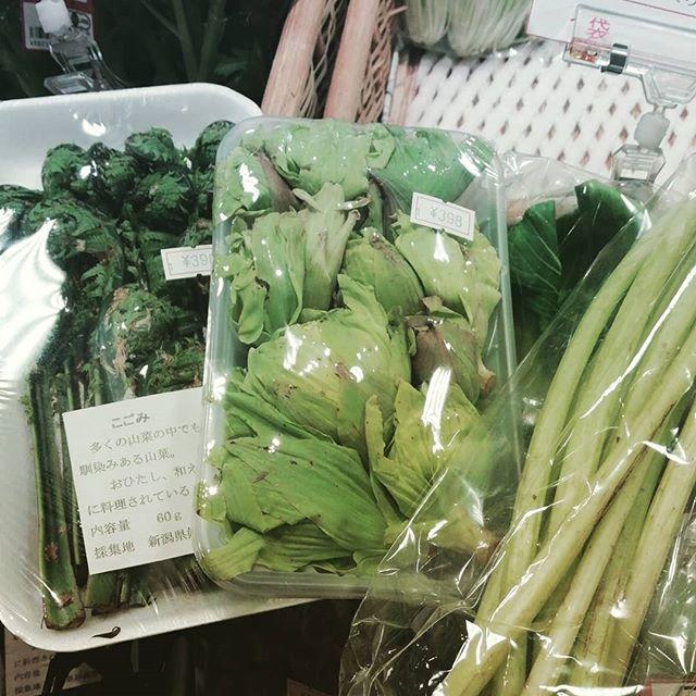 新潟産のこごみ、岩手産のふきのとう、高知産の野ぶき、山のめぐみの山菜が入荷中ですよ!#アンドリーフ #大泉学園 #ゆめりあ #オーガニック #自然食品 #無添加 #andleaf #organic #山菜 #春のご飯 #天ぷらもいいけど茹でただけの山菜も最高